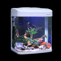 Small Aquarium Design Ideas