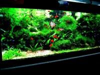 Tropical Aquarium Fish Tank | Aquarium Design Ideas
