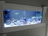 Wall Mounted Reef Aquarium   Aquarium Design Ideas