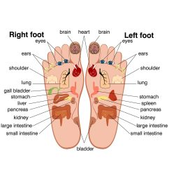 foot pain pressure points [ 2048 x 2048 Pixel ]