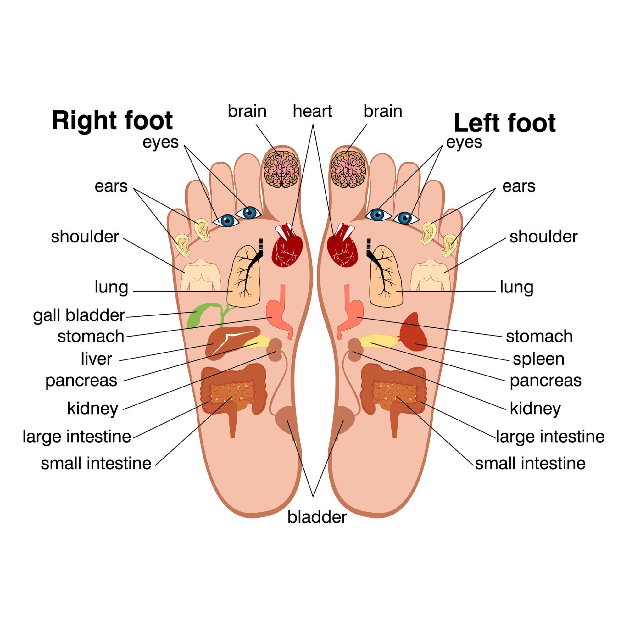 hight resolution of foot pain pressure points