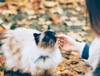 The Best Wet Cat Food To Get for Your Lovely Cat