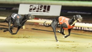 Bank Holiday Monday Puppy Classic Final 11