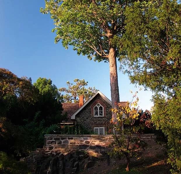 Repairing-Walls-Tree-Damage