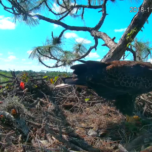 Dahua Donates Camera to Bald Eagle Habitat – Dahua North America