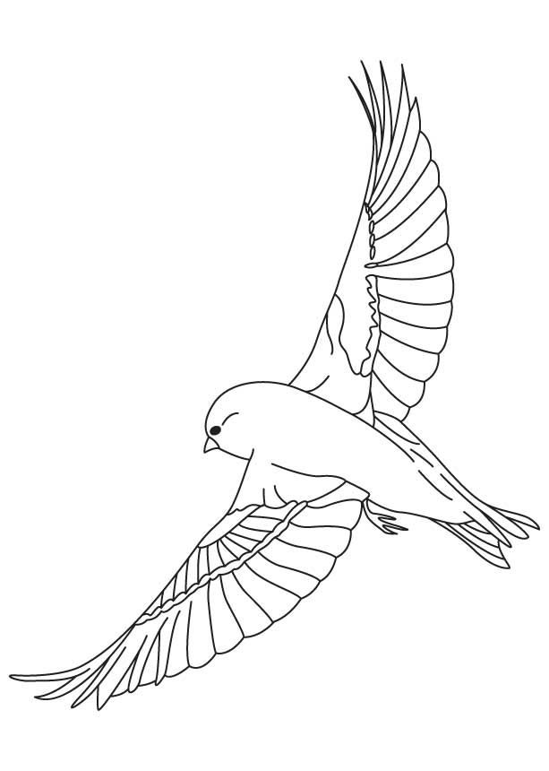 Finches Flying Coloring Page Download Free Finches