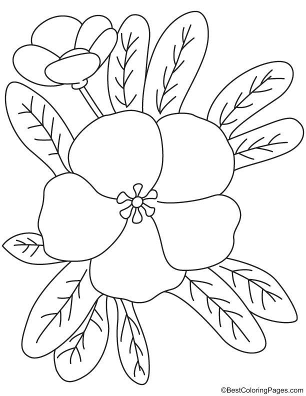 Free primrose coloring pages