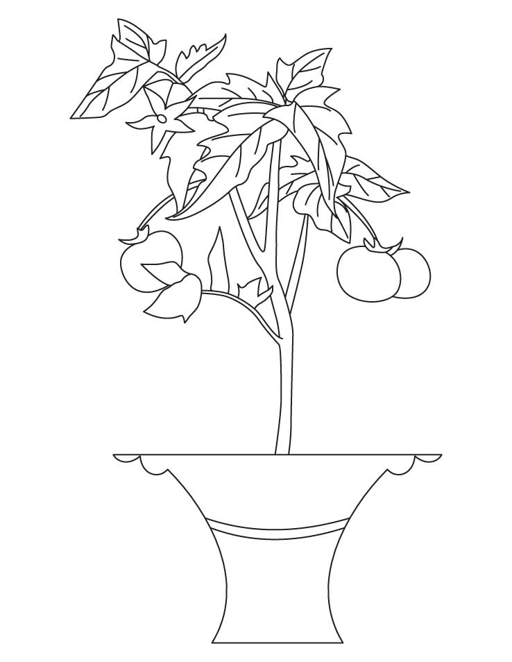 Chard Coloring Page