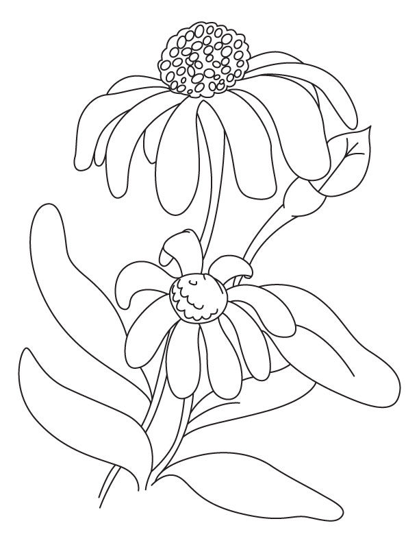 Aster Flower Coloring Coloring Page Coloring Pages