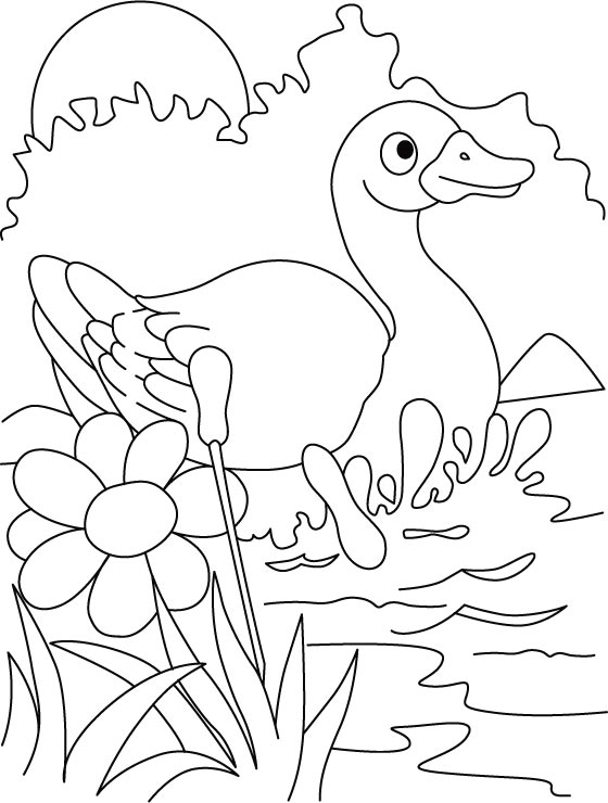 Duck-the beautiful diver coloring pages