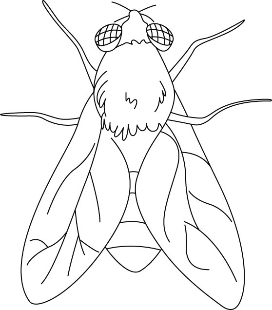 template of insects coloring pages