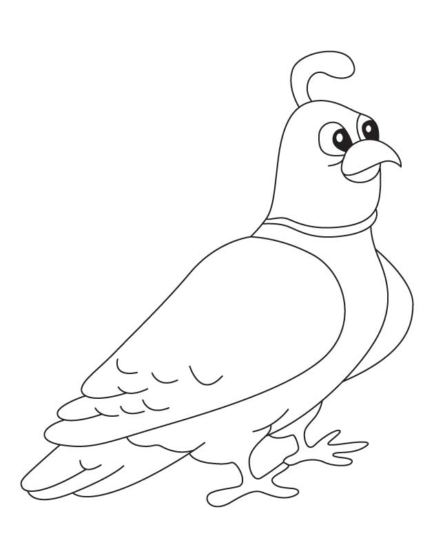 Quail Coloring Page For Kids