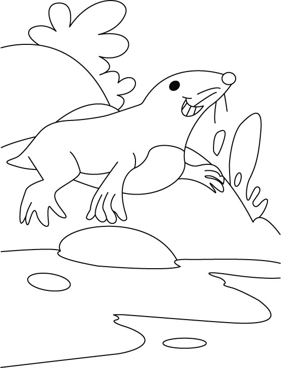 Seal Roar Wanna Play Basketball Coloring Pages