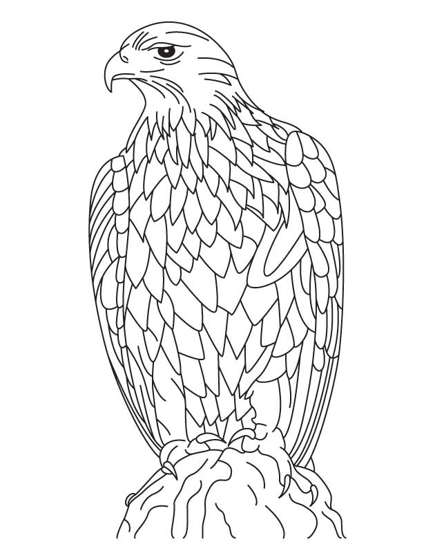 Field Day Activities Bird Coloring Coloring Pages
