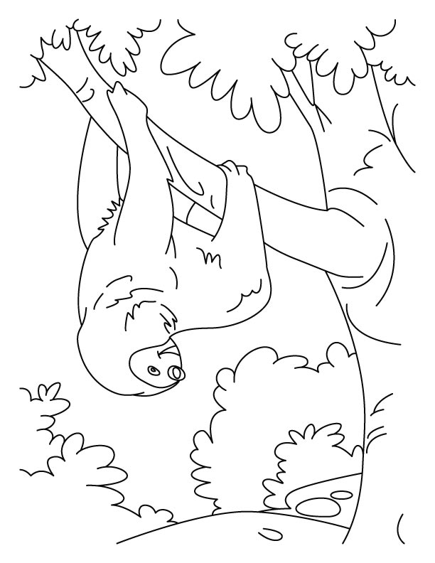 Amazing Sloth Coloring Pages Line Art Free Printable