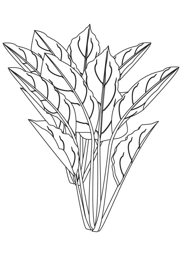 Green Leafy Vegetables Clipart Black And White