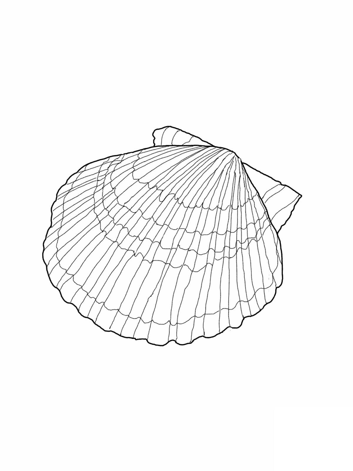 Seashell Coloring Page : seashell, coloring, Printable, Seashell, Coloring, Pages