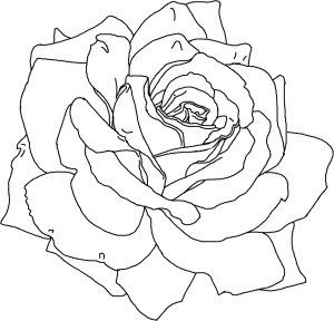 coloring flower printable pages flowers rose sheets roses drawing colouring outline drawings simple realistic adults adult line pattern patterns draw