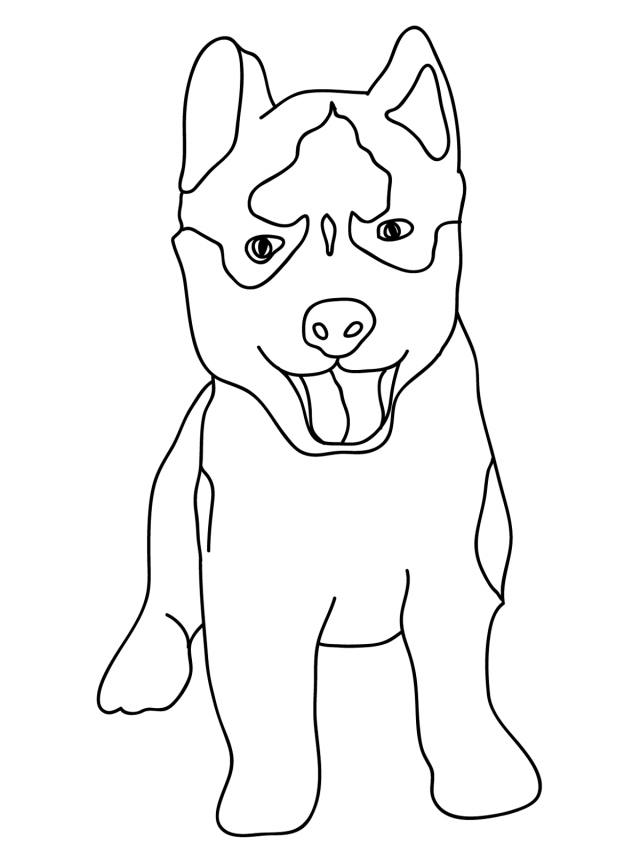 Husky Coloring Page : husky, coloring, Husky, Coloring, Pages