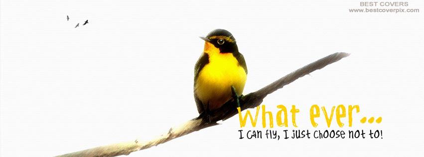 birdcover