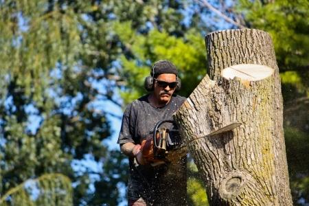 Tree Service Contractor