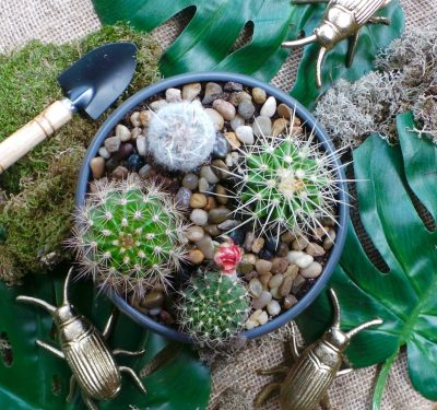 Get Planting with DIY Cacti Arrangements
