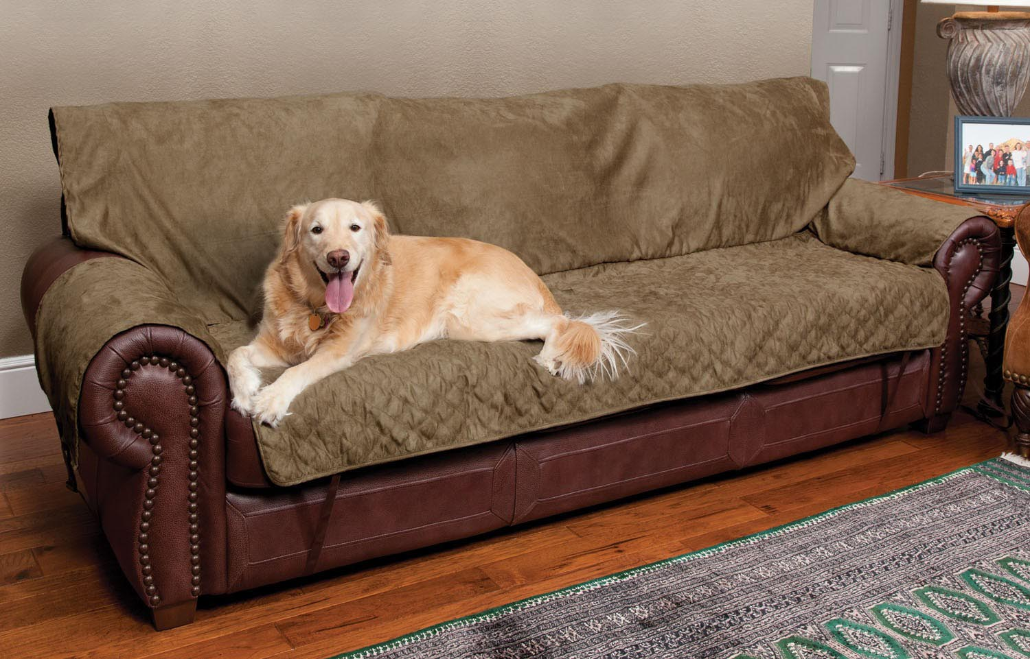 leather sofa dog protector wall mount fold out sleeper use throws for couch to protect your and make a