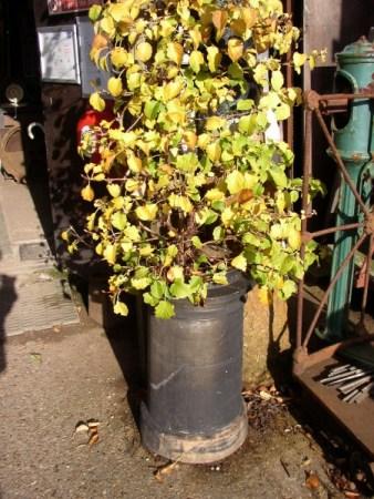 Planted Chimney Pot