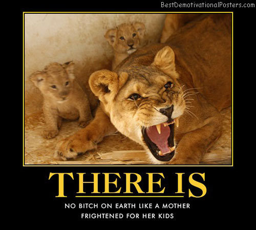 Aggressive Quotes Wallpapers Lion Demotivational Posters Amp Images