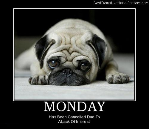 Monday Sad Pug