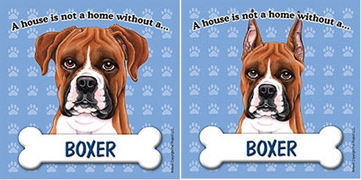 Boxer dog ear cropping