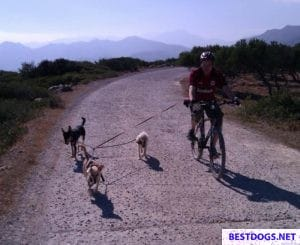 Bicycle tour with dogs on Crete.