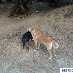 rescue dog Canella