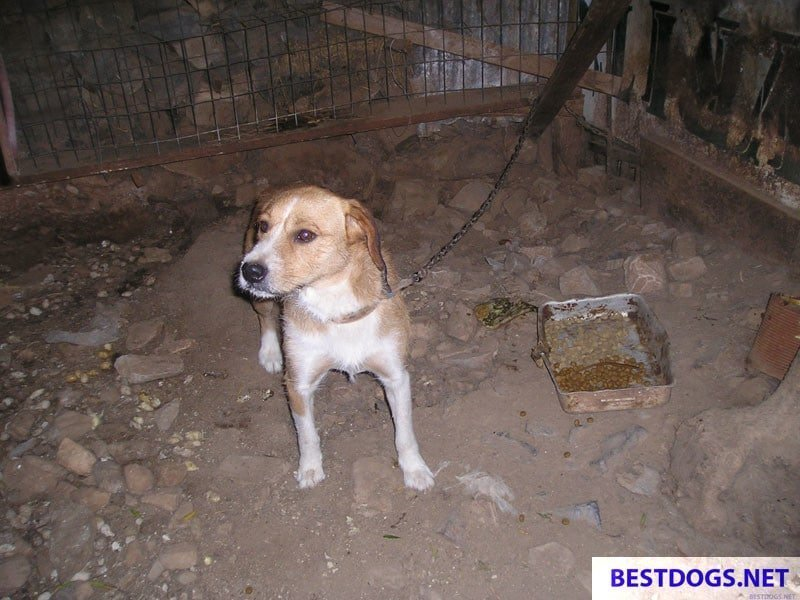 illegal keeping of chained barrel dogs