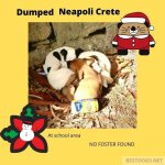 The abandoned Santa Claus puppies of Neapoli.