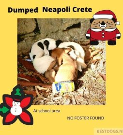 Santa Claus puppies from Neapoli