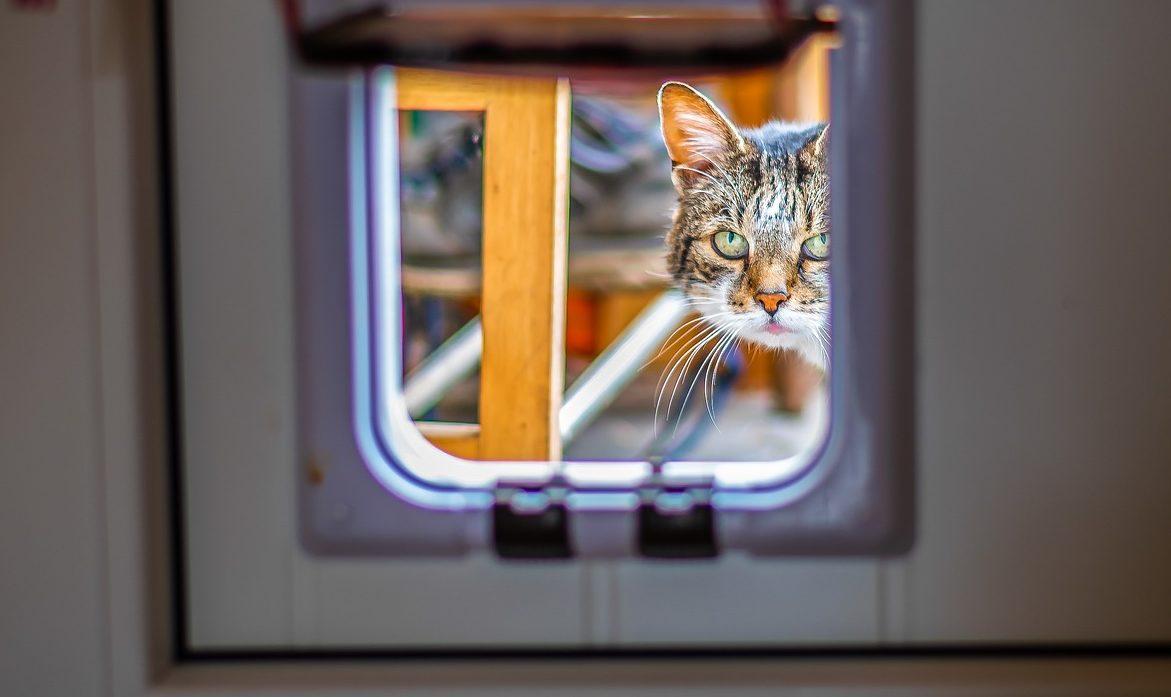 So Baut Ihr Eine Katzenklappe In Ein Offenes Fenster Ein