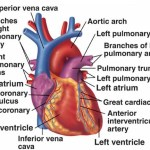 What Does Cardiovascular Fitness Mean