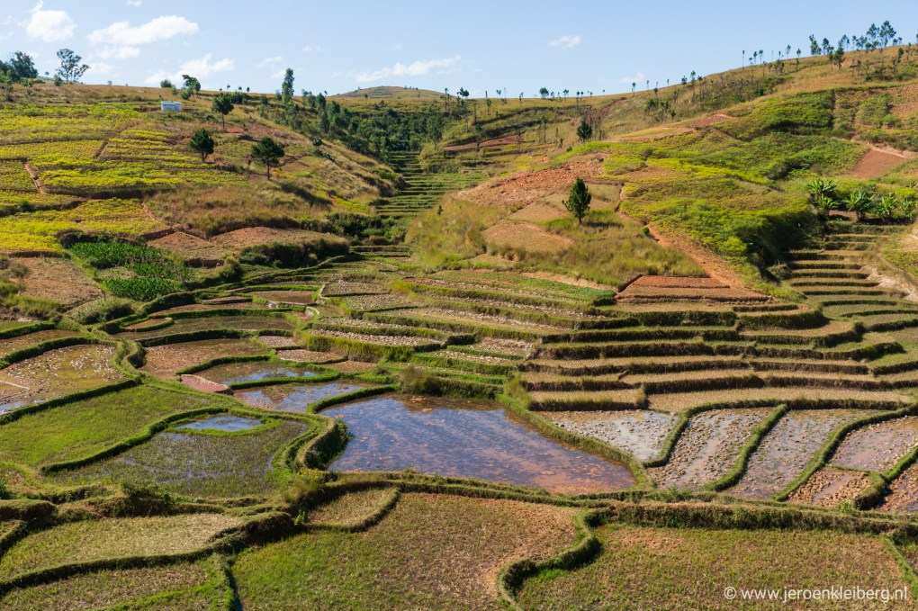 Rijst Madagaskar