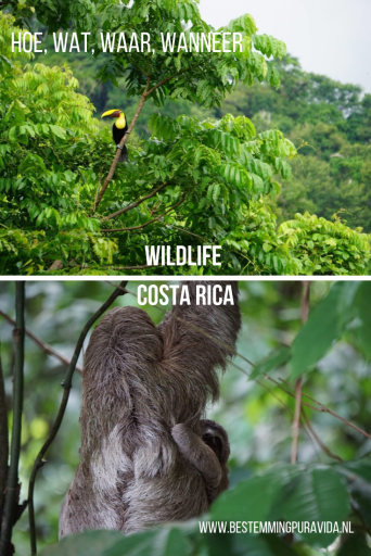 wildlife costa rica