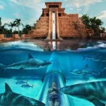 Atlantis Bahamas Resort: Special Attractions for Kids
