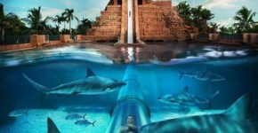 Atlantis Bahamas Resort: Special Attractions for Kids