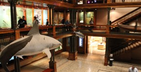 Bishop Museum:  A Hawaii Attraction