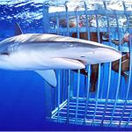 Hawaii Boat Tours and Hawaii Shark Encounters
