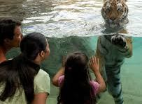 Tampa Attraction – Florida Family Vacation in the Tampa Bay Area
