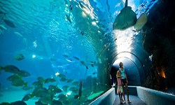Hawaii Aquariums