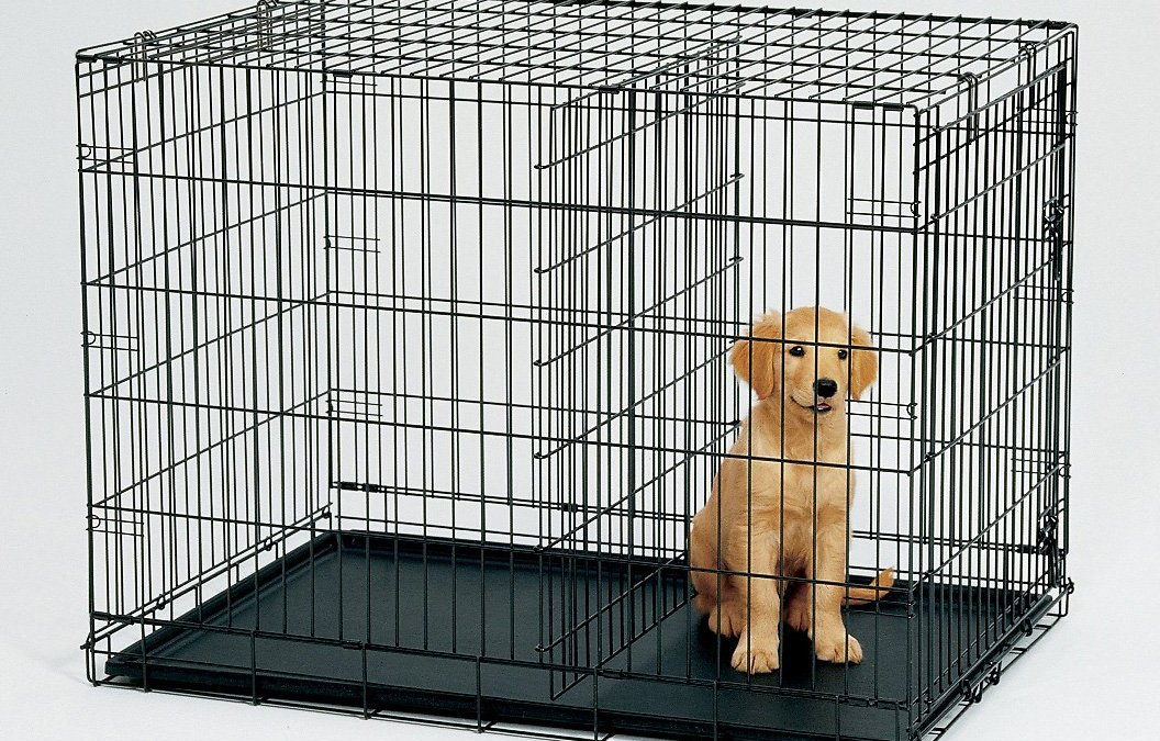 Why You Need To Buy Midwest Dog Crates