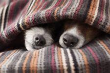 burrow blankets