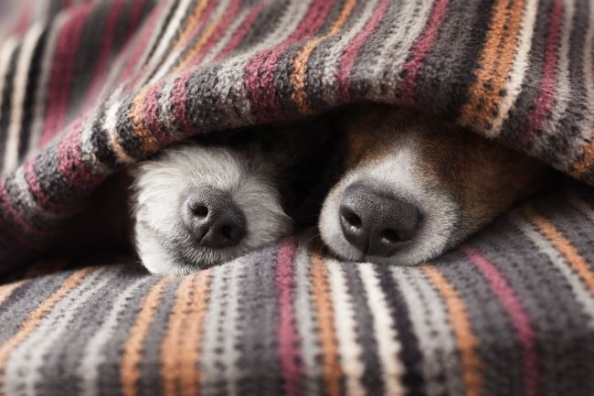 Snuggle Buddies for your Pet – Burrow Blanket