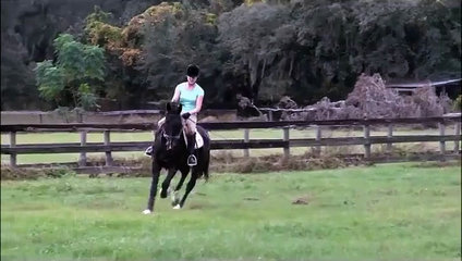 Five Phases Farm the Best Place for Your Racing Horse and Other Activities